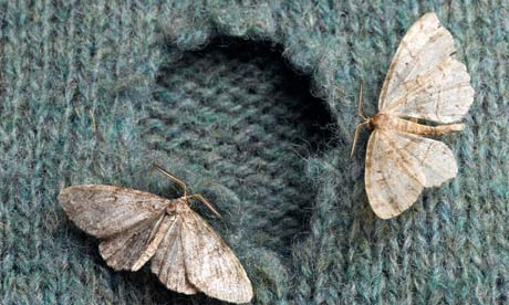 Cleaning and Storing Garments to Prevent Insect Damage